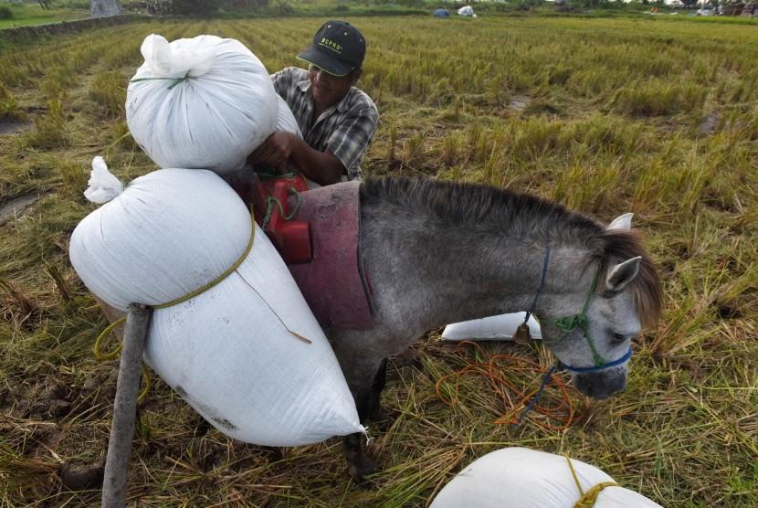 Petani siap membawa padi hasil panennya dengan kuda di Persawahan Samata Gowa, Sulawesi Selatan, Kamis (6/7).