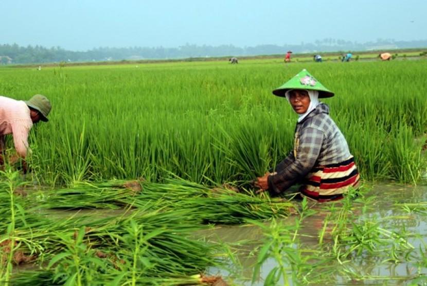 Petani sedang bercocok tanam (ilustrasi)