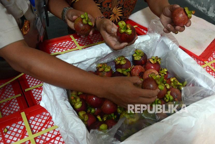 Petugas Balai Karantina Pertanian Kelas I Denpasar memeriksa buah Manggis sebelum dikemas di Cargo Benoa, Bali, Kamis (5/4).