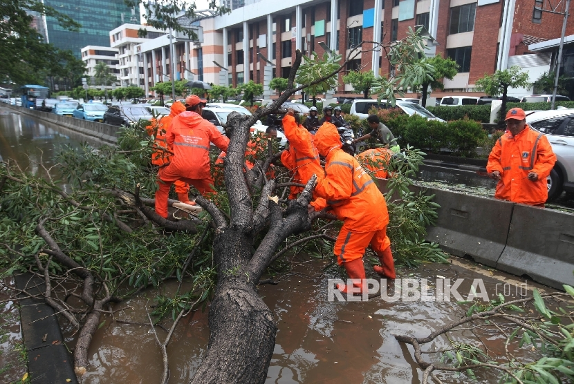 Petugas berusaha membersihkan pohon mahoni yang tumbang di Jalan Rasuna Said, Jakarta Selatan. Pohon tumbang akibat hujan deran disertai angin kencang (Ilustrasi)