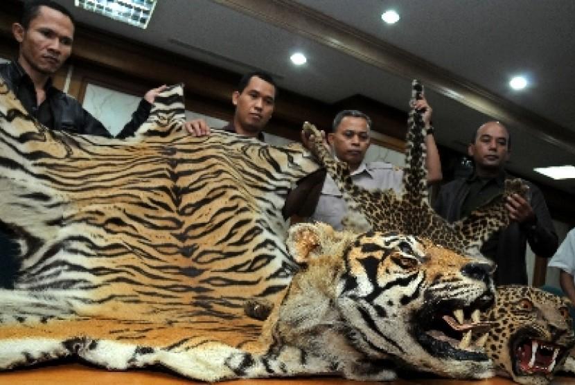Penyitaan kulit harimau. (ilustrasi)