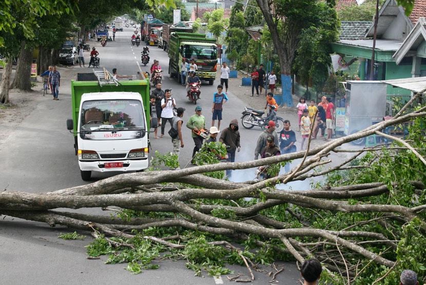 Pohon Peneduh Jalur Nasional di Purwakarta Rawan Tumbang
