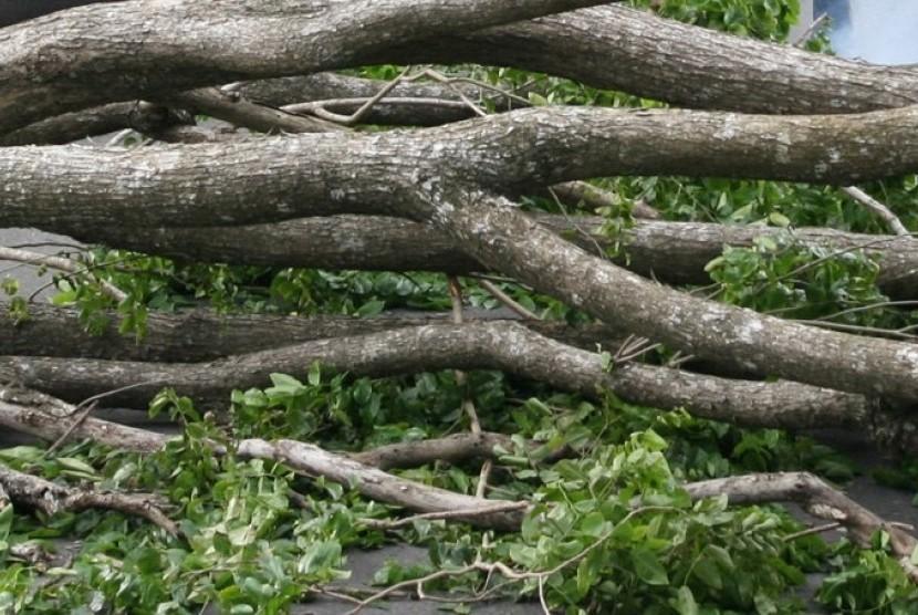 Pohon Tumbang di Banjarnegara, Satu Tewas, Tiga Luka Berat