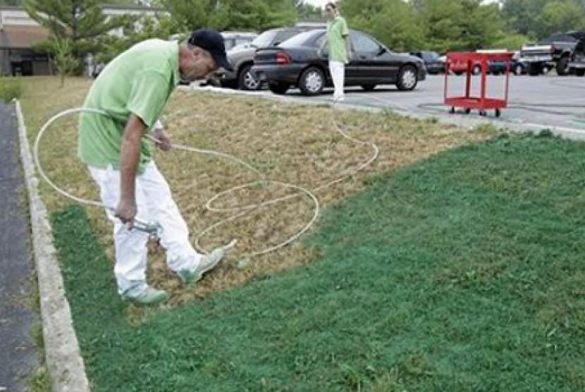 Praktik pewarnaan halaman rumput dengan cat organik warna hijau dilakukan warga ketika musim kemarau melanda AS