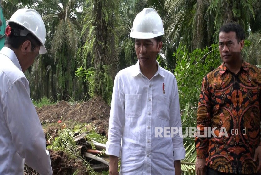President Joko Widodo oversees people's palm oil plantation after inaugurating the rejuvenation program of 9,000 hectares palm oil plantation in Serdang Bedagai, North Sumatra, Monday (November 27).