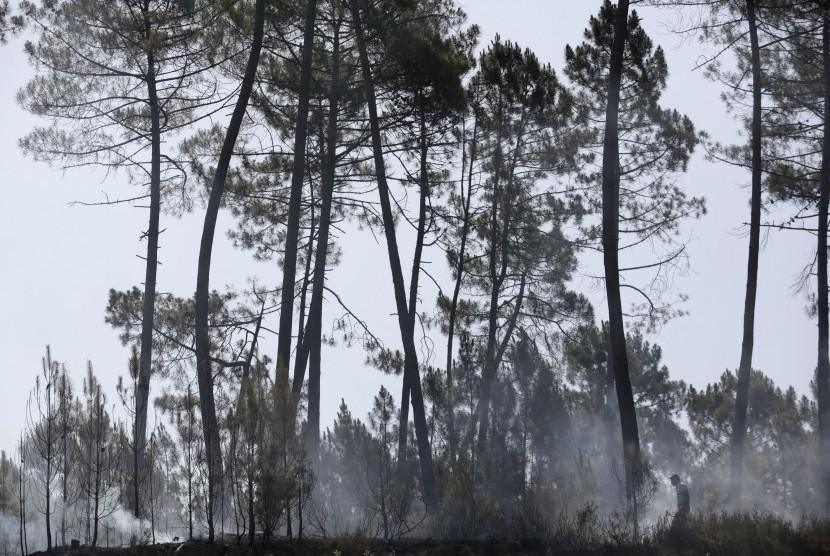 Kebakaran Hutan Paksa Mendagri Portugal Mundur
