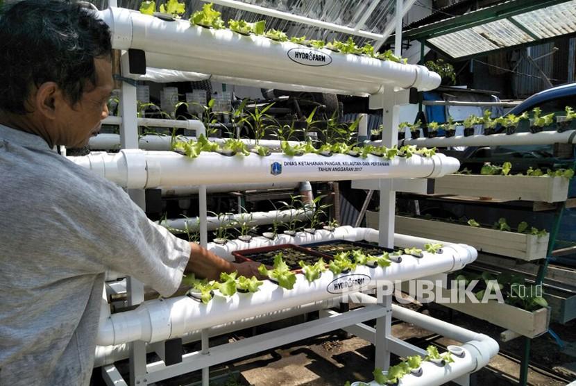 Rak hidroponik dari Dinas Ketahanan Pangan, Kelautan, dan Pertanian yang diberikan ke warga Cikini, Jakarta Pusat, Kamis (7/12).