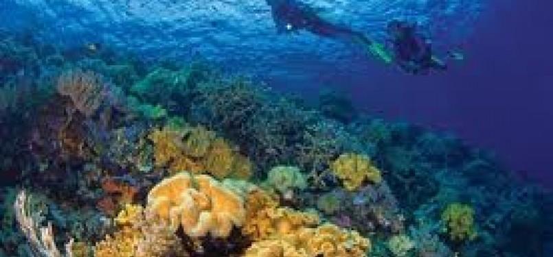 Salah seorang penyelam menikmati keindahan bawah laut Wakatobi (ilustrasi)