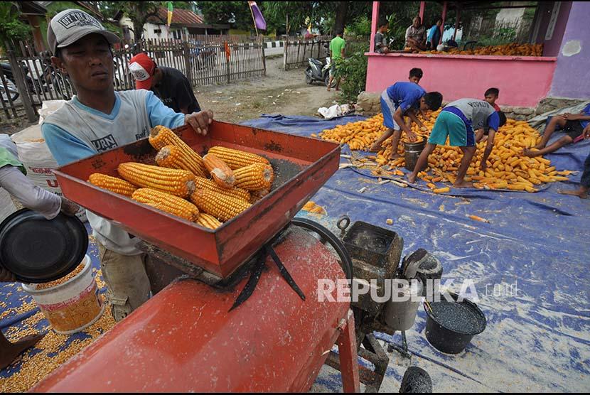 Sejumlah pekerja mengolah jagung yang baru dipanen untuk diproduksi menjadi jagung pakan ternak di Desa Bora, Kabupaten Sigi, Sulawesi Tengah, Rabu (20/9). Kabupaten Sigi merupakan salah satu daerah penghasil jagung di Sulawesi Tengah dengan luas lahan tanam jagung tahun ini mencapai sekitar 2.500 hektare. Kementerian Pertanian menargetkan produksi jagung nasional hingga Desember 2017 mencapai 24,5 juta ton.