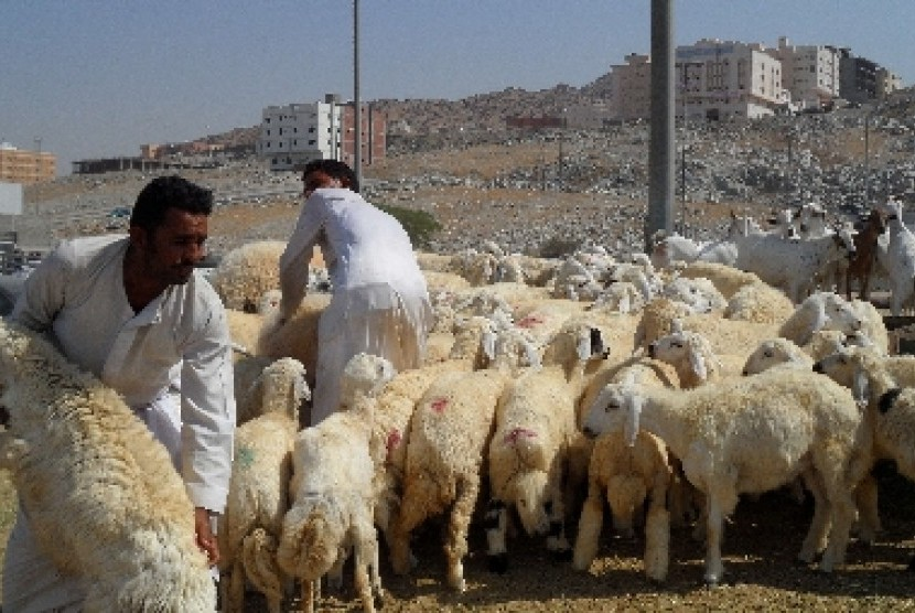 Sejumlah pembeli memilih domba yang akan digunakan untuk membayar dam (denda) di pasar ternak Kaqiyah, Makkah, Arab Saudi.