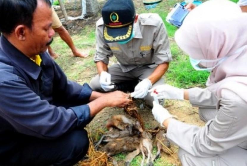 Sejumlah petugas memeriksa bebek yang mati mendadak di Desa Pakijangan, Brebes, Jateng.