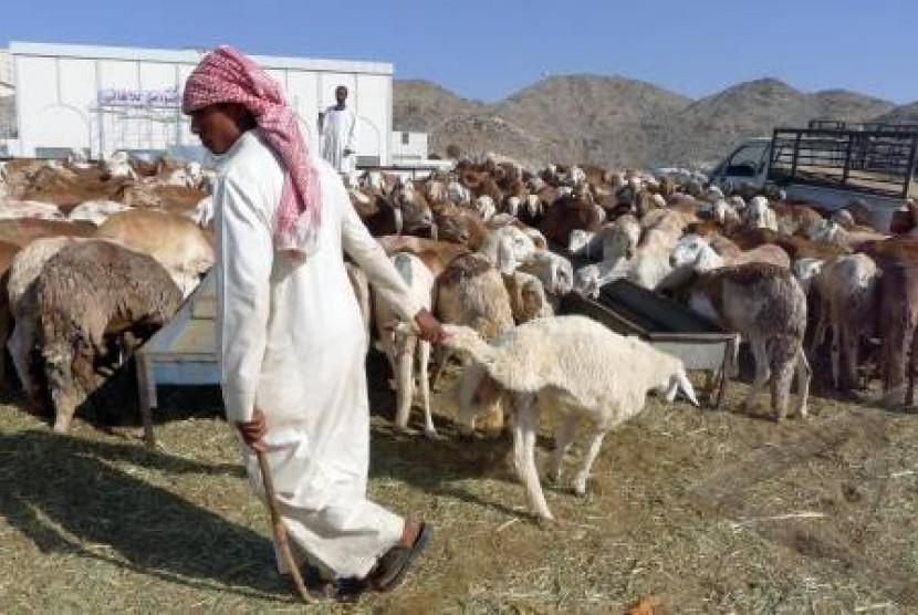 Seorang pedagang mengembala kambing untuk qurban di pasar hewan Qalkiyah, Mekkah, Arab Saudi, Rabu (2/11).