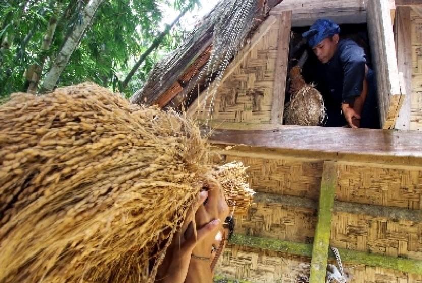 Seorang warga suku Baduy Luar mengambil padi di dalam lumbung padi di Kampung Gajeboh, Lebak, Banten, Sabtu (21/3). Lumbung padi merupakan tempat untuk menyimpan padi yang digunakan oleh setiap warga di suku Baduy setelah melakukan panen, dan dalam satu lu