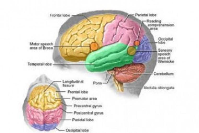 Skema Otak Manusia