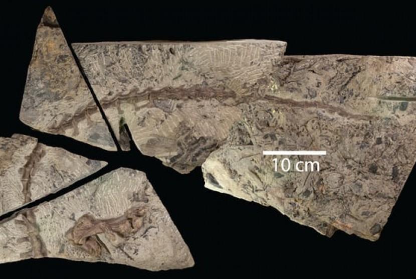 Sosil disonaurus mini.