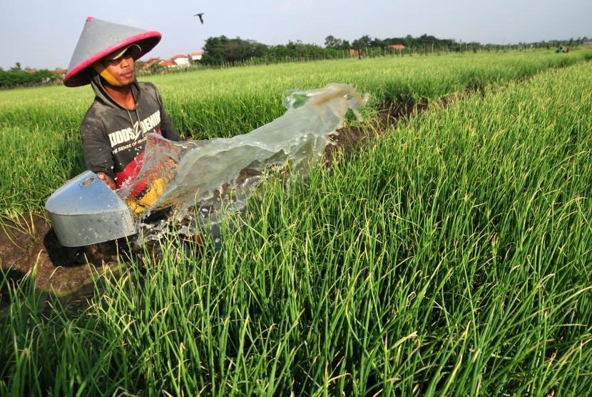 Petani Bawang di Bantul Terancam Gagal Tanam