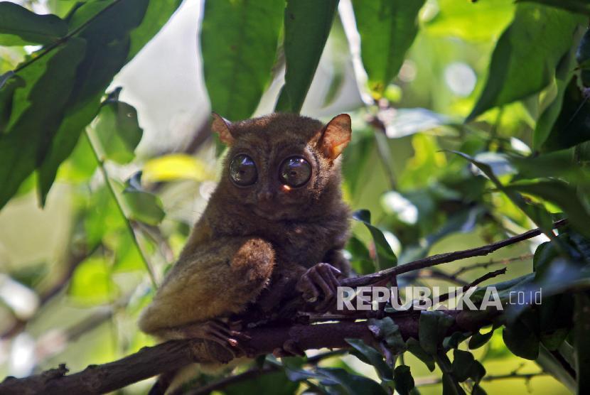Monyet Terkecil Hingga Batu Berputar di Belitung Timur