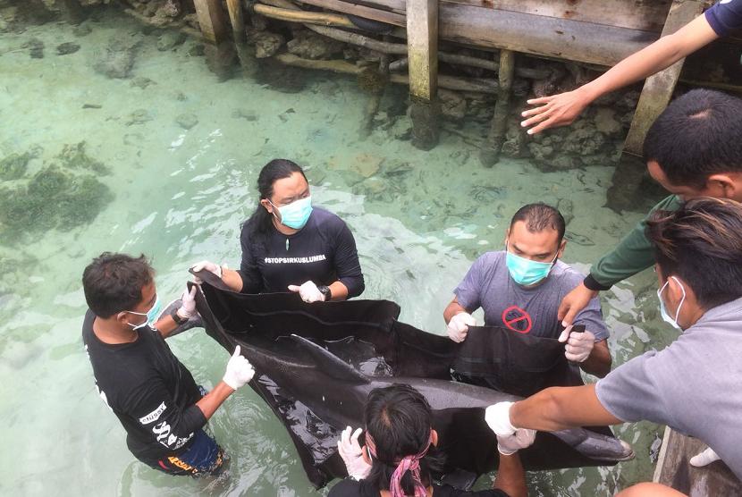 Dua Ekor Lumba-Lumba Mati di Karimun Jawa