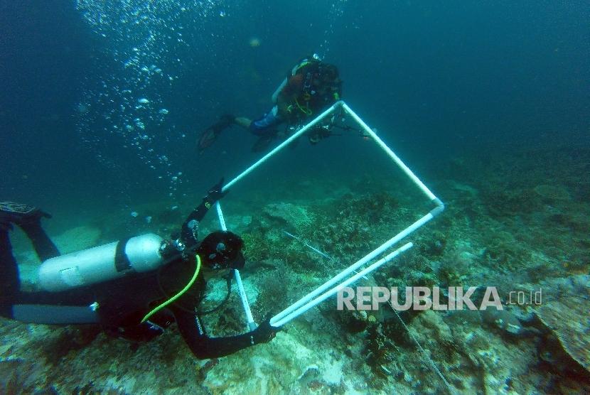 Tim peneliti mendata kerusakan karang yang disebabkan kandasnya Kapal MV Caledonian Sky berbendera Bahama di perairan Raja Ampat, Papua Barat, Sabtu (4/3).