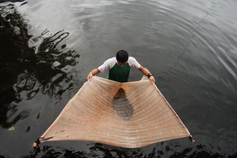 Warga menangkap ikan rinuak menggunakan kain kelambu di Danau Maninjau, Agam, Sumatra Barat. (Ilustrasi)
