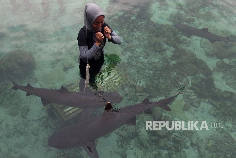 Wisatawan berada di kolam penangkaran hiu di Pulau Menjangan Besar, Karimunjawa, Jawa Tengah, Rabu (9/8).