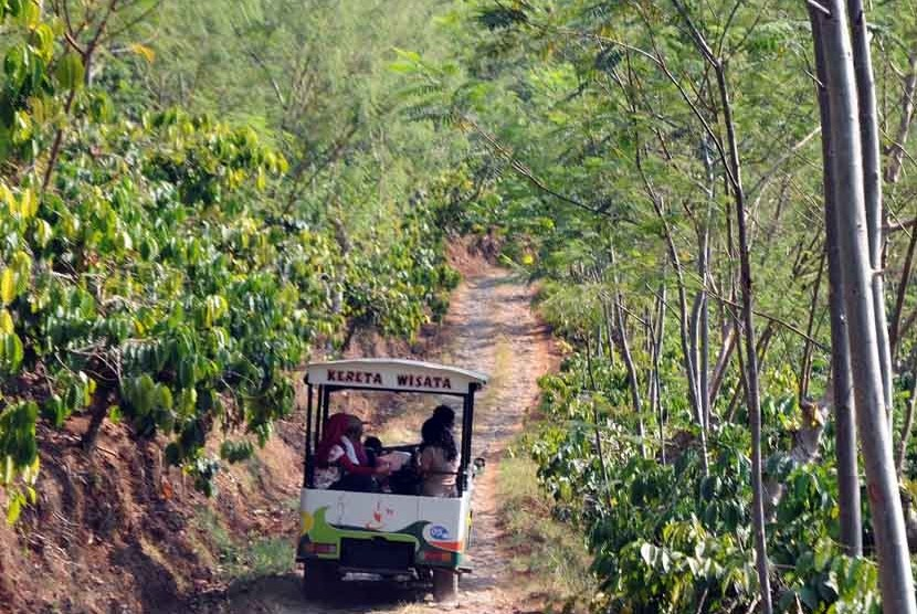 KOPI BANARAN Java Ecotourism Yogyakarta Amp Bali Driver ATOK