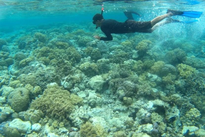 Wisatawan menyelam di titik selam Mari Mabuk, Pulau Tomia, Waha, Tomia, Wakatobi, Sulawesi Tenggara. (ilustrasi)