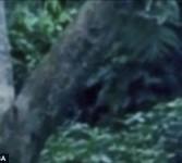 Inilah gambar alien yang diduga muncul di Amazon, Brazil. Sang alien tartangkap kamera secara tak sengaja, ketika si pemilik kamera sebetulnya tengah membidik gambar anak-anak yang tengah bermain di pinggiran hutan.