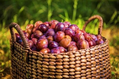 Buah plum bisa diolah sebagai saus untuk dituang ke atas pastry almond.