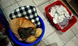 Tumpukan pakaian kotor milik konsumen di toko penyedia jasa laundry.  (foto : MgROL_45)