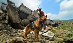 Anggota Tim SAR dari K 9 menggunakan anjing pelacak mencari korban yang diduga tertimbun material longsor tebing kawah Gunung Galunggung, di Kabupaten Tasikmalaya, Jawa Barat, Senin (18/9).