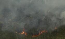Asap membubung saat terjadi kebakaran hutan dan lahan di Desa Sungai Rambutan, Indralaya Utara, Ogan Ilir (OI), Sumatera Selatan, Kamis (14/9).