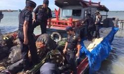 Bea Cukai Aceh menggagalkan penyelundupan bibit dan pohon kurma melalui patroli laut.