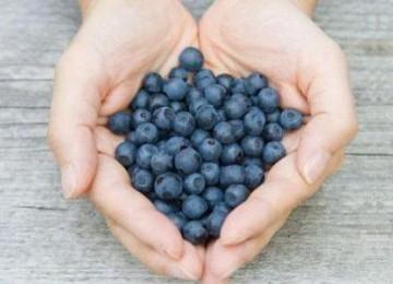 Topic   blueberry  c1cb5cd115