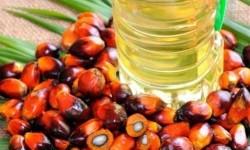 Palm oil. (Illustration)