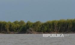 Ekosistem mangrove (ilustrasi)