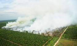 Foto udara kebakaran lahan yang diambil dari Heli Bell 412 milik Kementerian Lingkungan Hidup dan Kehutanan di Kabupaten Kubu Raya, Kalbar, Kamis (25/8).