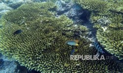 Terumbu karang. Ilustrasi