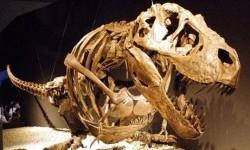 Kerangka Tyrannosaurus.