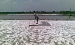 Ladang garam, ilustrasi