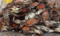 Bisnis Kepiting AS Terancam