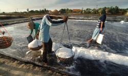 Petani garam (ilustrasi)