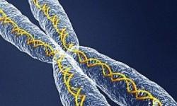 Sel DNA manusia