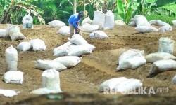 Seorang petani sayuran menyiapkan lahan untuk ditaburi pupuk organik (ilustrasi)