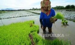 Petani tengah menggarap lahan pertanian/Ilustrasi