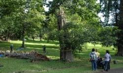 Suasana Kebun Raya Bogor.