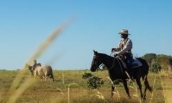 Teknologi satelit juga membantu peternak memonitor kondisi lahan peternakan mereka.