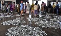 Tempat Pelelangan Ikan