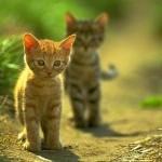 Kisah Penolong Kucing
