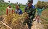 Anggota TNI dari Koramil Ngasem berbaur dengan buruh tani memanen padi di area persawahan Desa Paron, Kediri, Jawa Timur, Jumat (31/3).